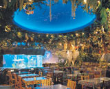 Rainforest Cafe Restaurant Dining